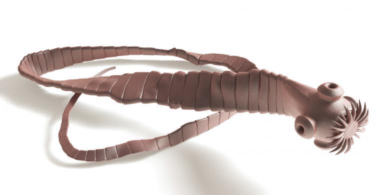 Hasil gambar untuk cacing pita