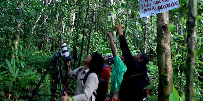 Mengejar Cenderawasih Burung Dari Surga Papua Kompas Com