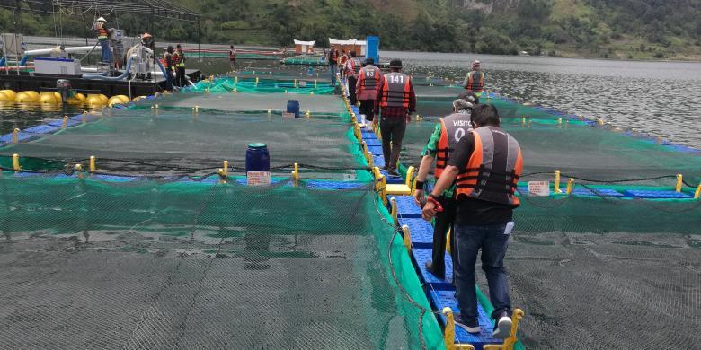 Ikan Nila Hasil Budidaya Di Danau Toba Diekspor Ke Asean Hingga As