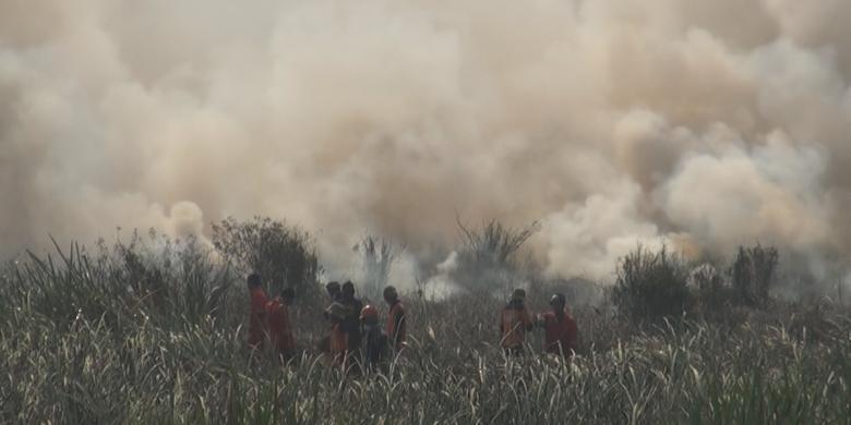 Mengapa Lahan Gambut di Indonesia Sering Terbakar? Ini Penjelasan Pakar IPB