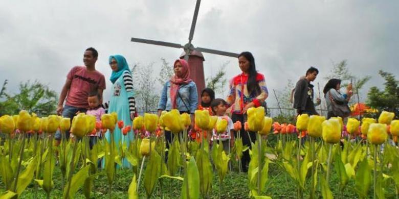 Lagi Hit Di Baturraden Foto Di Antara Bunga Tulip Dan Keliling