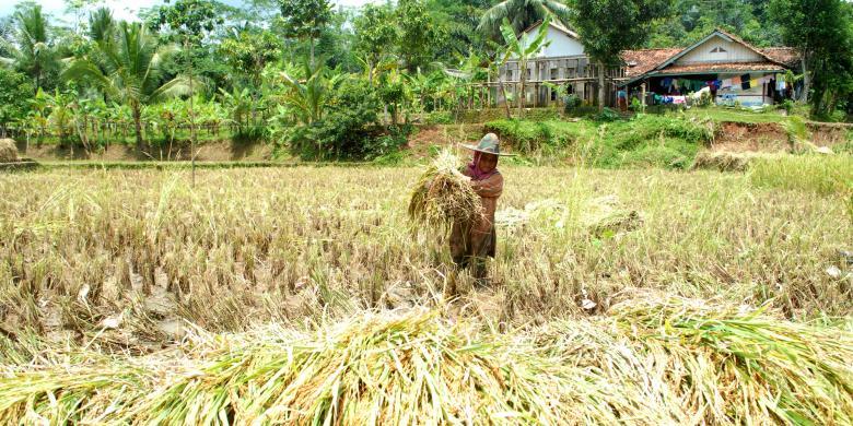 Kontribusi Sektor Pertanian Ke Ekonomi Indonesia Masih Rendah