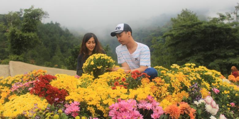 Batu Flower Garden, Wisata Romantis Idola Kaum Remaja ...
