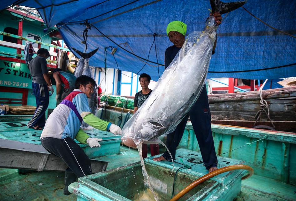 Bongkar Muat Ikan Tuna di Pelabuhan Muara Baru