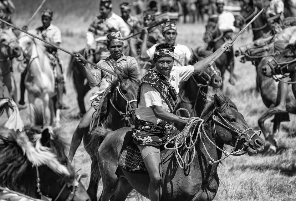Parade Kuda Sandalwood