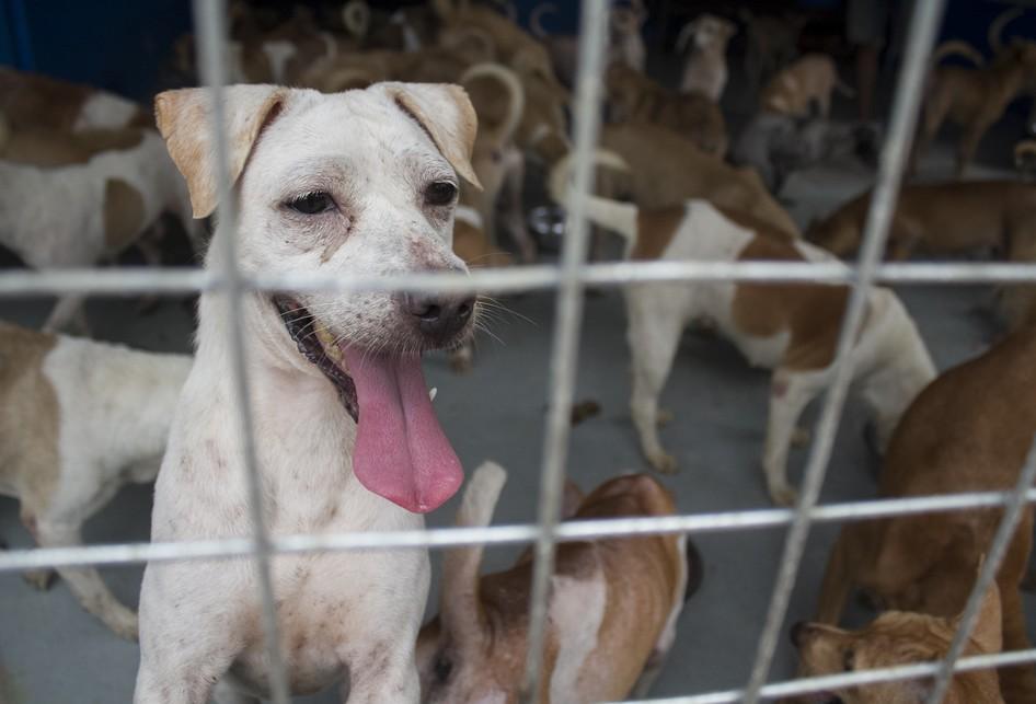 Shelter Anjing