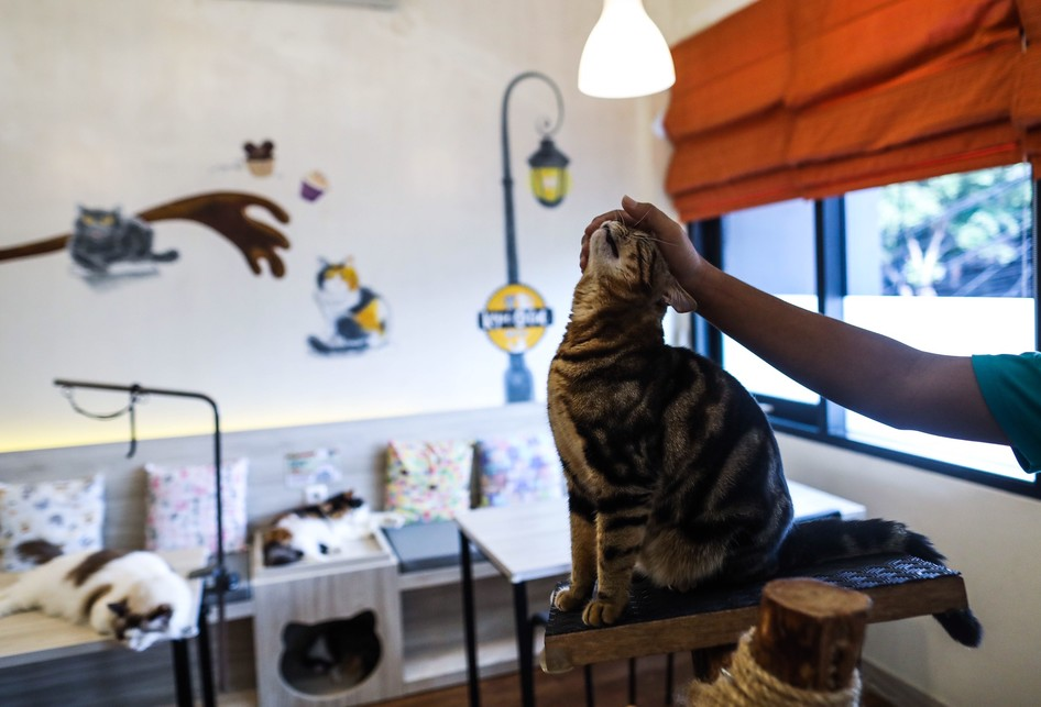 Perawatan Kucing di Kopi Cat Cafe by Groovy