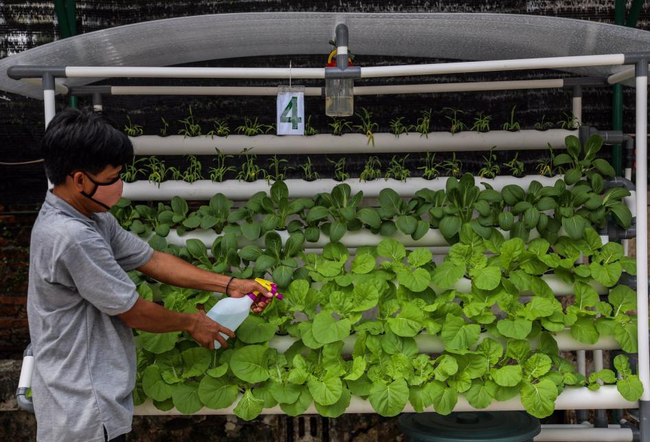 Urban Farming di Jakarta