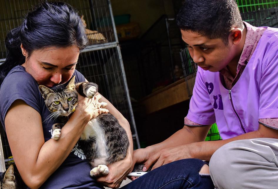 Sang Pelindung Kucing Telantar