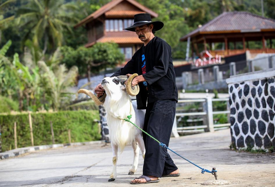 Perawatan Domba Tangkas Garut