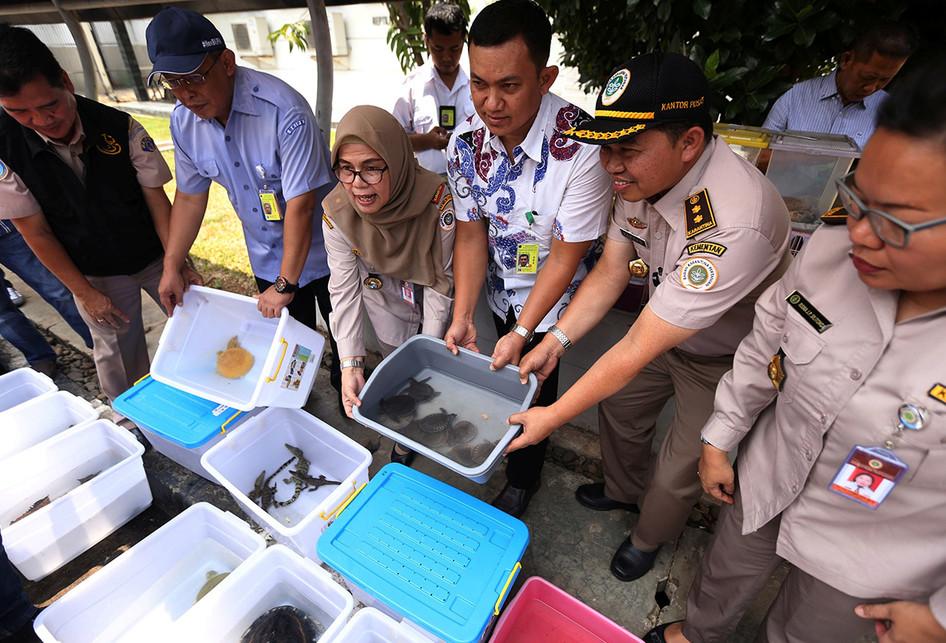 Penyelundupan Satwa di Bandara Soekarno-Hatta