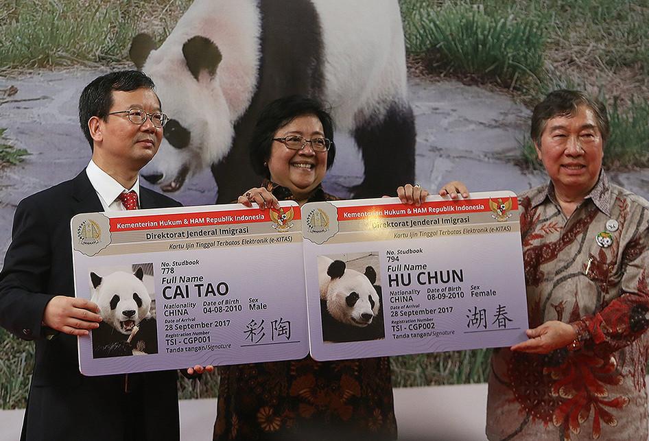 Kedatangan 2 Ekor Panda dari Tiongkok
