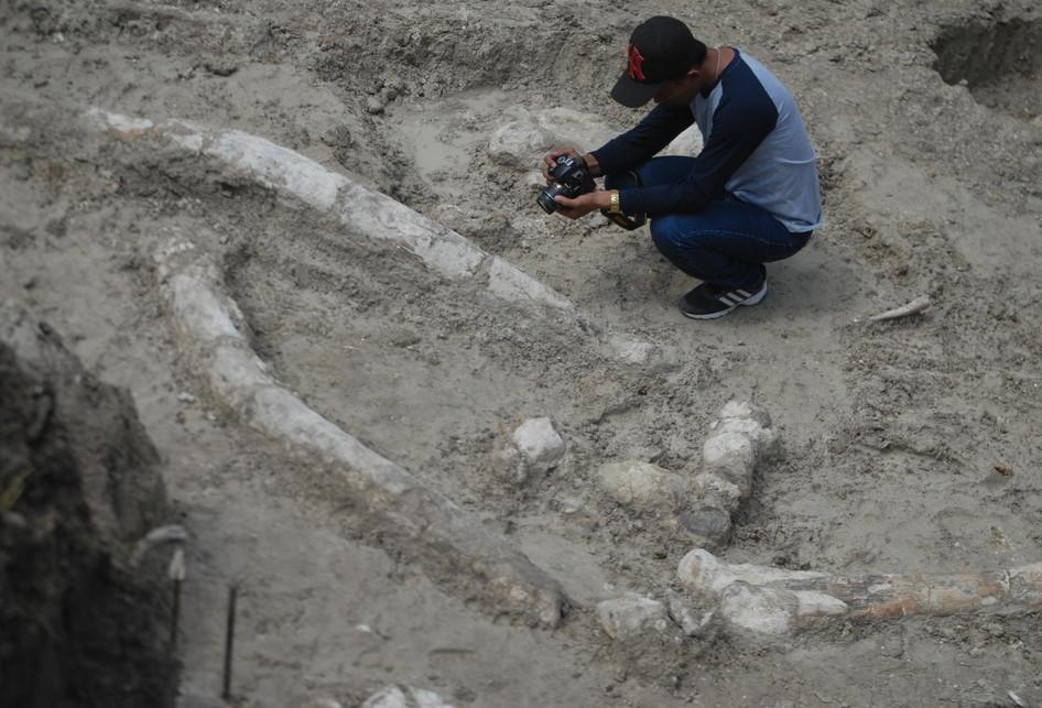 Penemuan Tulang Gajah Raksasa