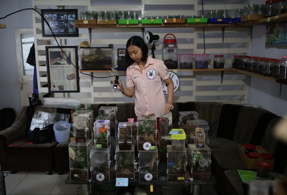 The Ming Chu Pemilik Ribuan Ekor Tarantula
